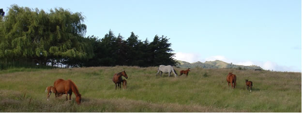 Horses grazing in a plush green field